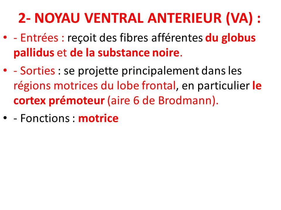 2- NOYAU VENTRAL ANTERIEUR (VA) :