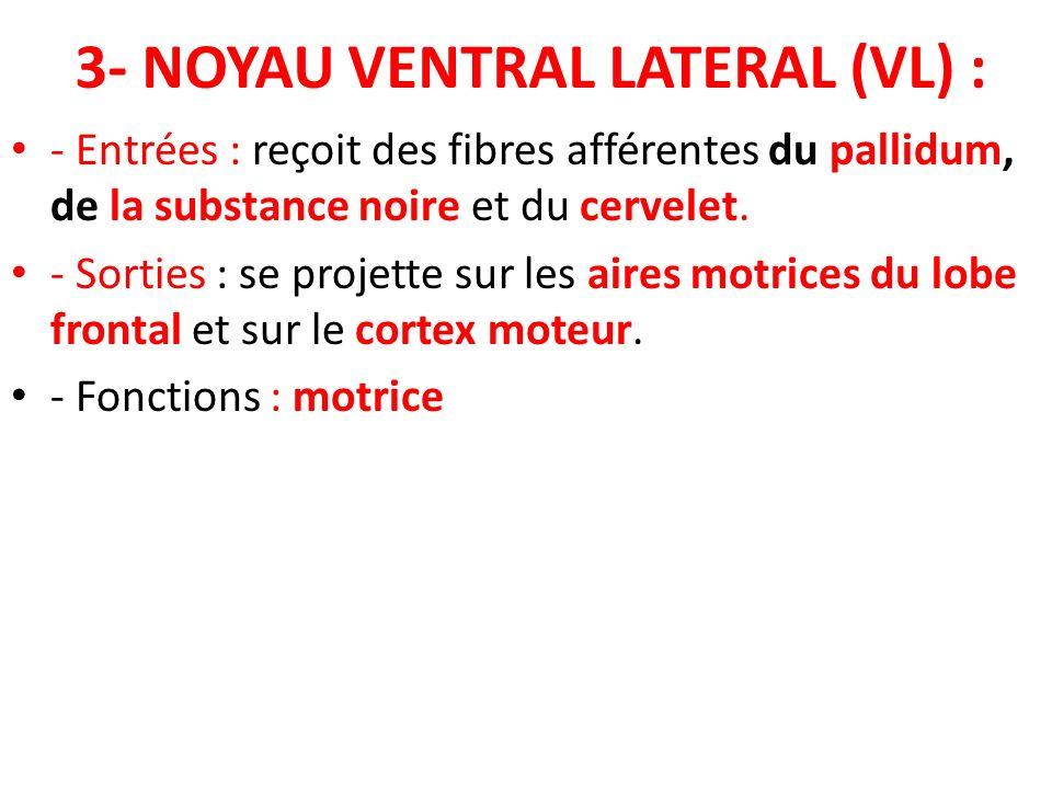 3- NOYAU VENTRAL LATERAL (VL) :