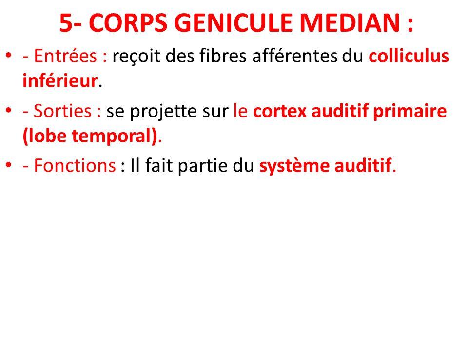 5- CORPS GENICULE MEDIAN :