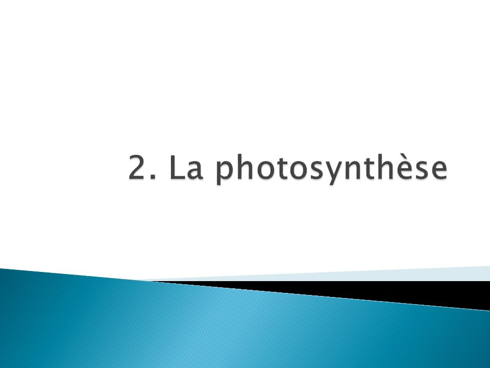 2. La photosynthèse
