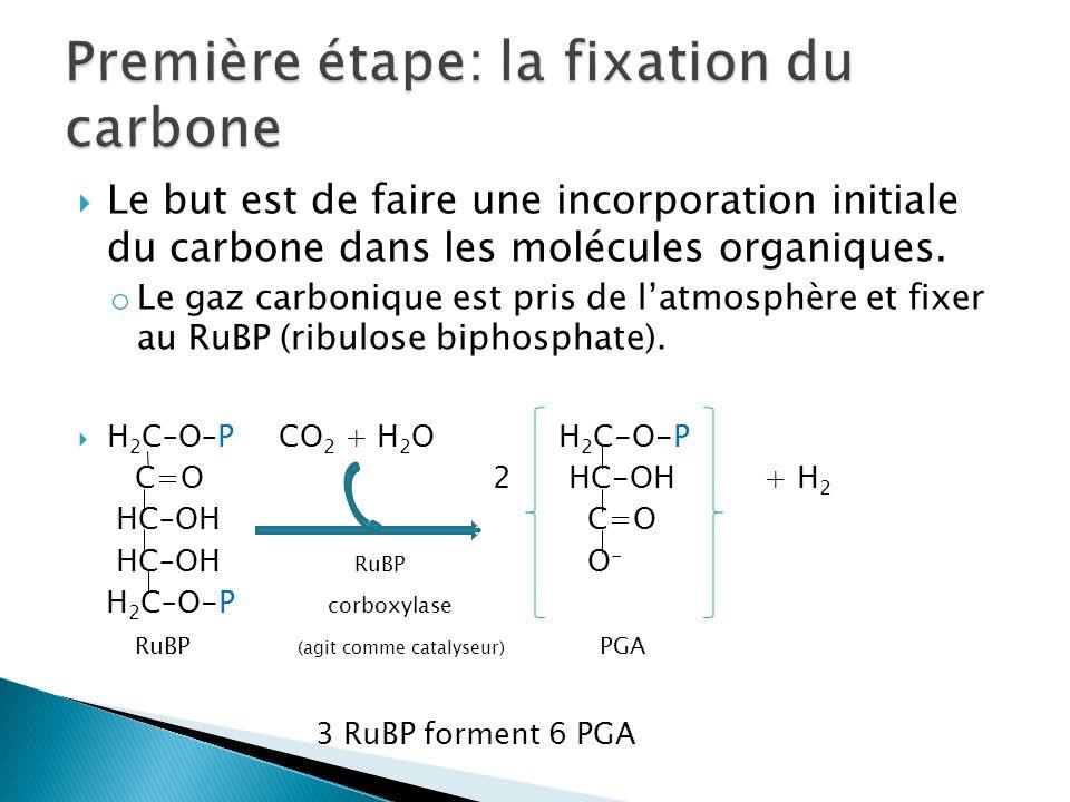 Première étape: la fixation du carbone