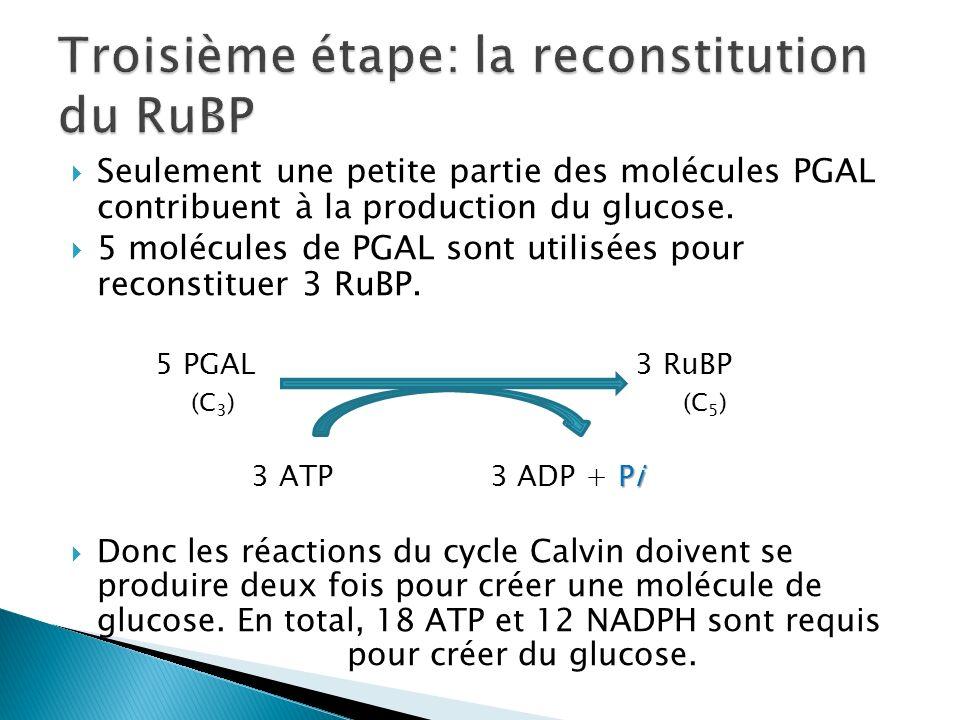 Troisième étape: la reconstitution du RuBP