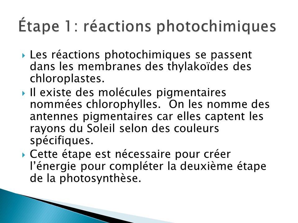 Étape 1: réactions photochimiques
