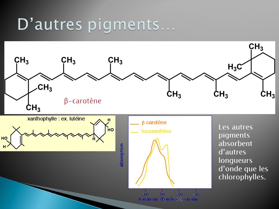 D'autres pigments… β-carotène