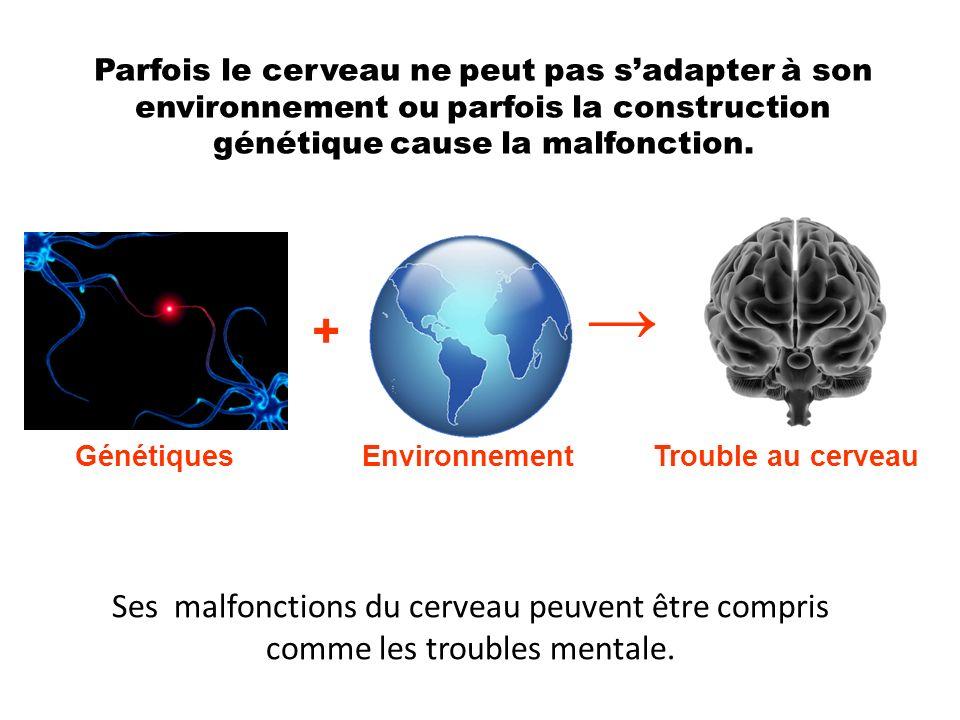 Parfois le cerveau ne peut pas s'adapter à son environnement ou parfois la construction génétique cause la malfonction.