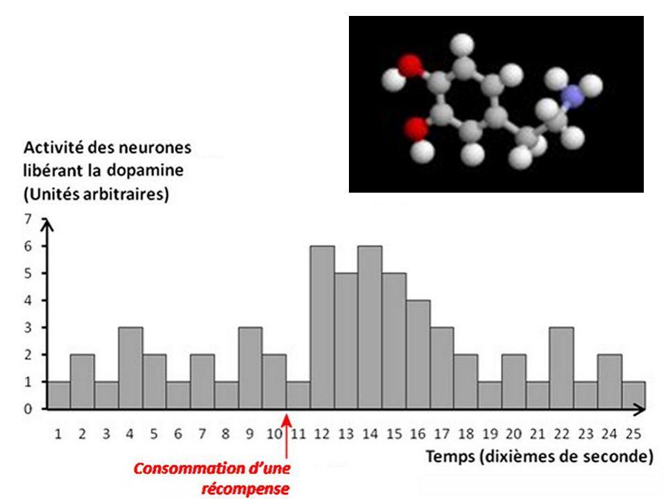 La dopamine est associée à la sensation de plaisir