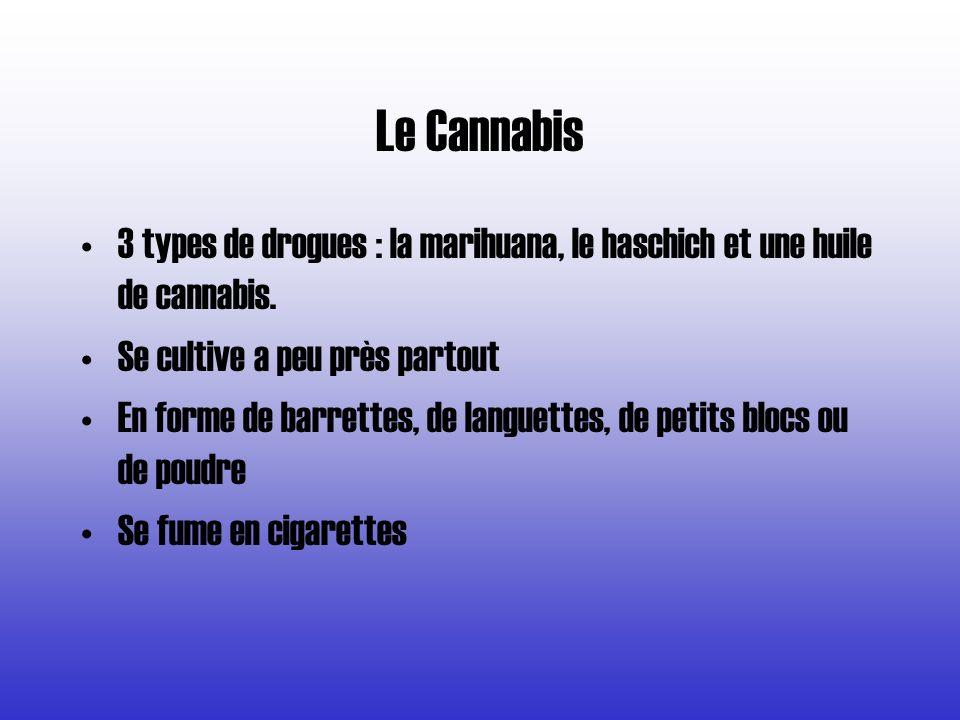 Le Cannabis 3 types de drogues : la marihuana, le haschich et une huile de cannabis. Se cultive a peu près partout.