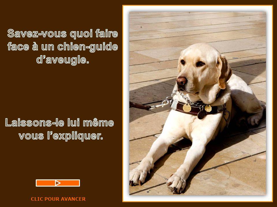 Savez-vous quoi faire face à un chien-guide d'aveugle.