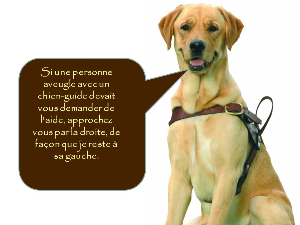 Si une personne aveugle avec un chien-guide devait vous demander de l aide, approchez vous par la droite, de façon que je reste à sa gauche.