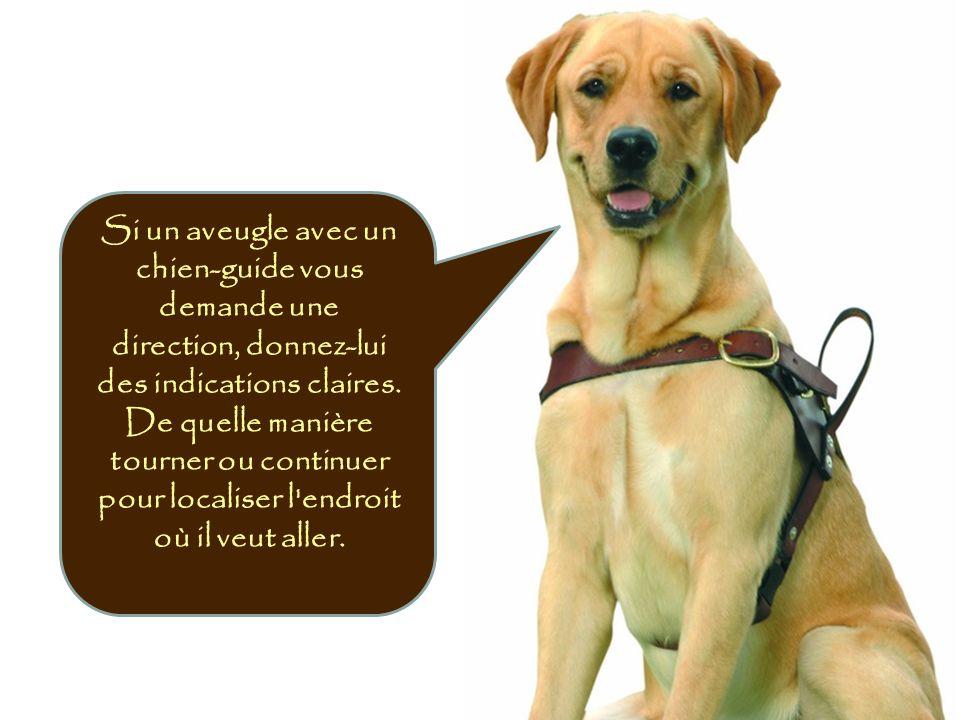 Si un aveugle avec un chien-guide vous demande une direction, donnez-lui des indications claires.