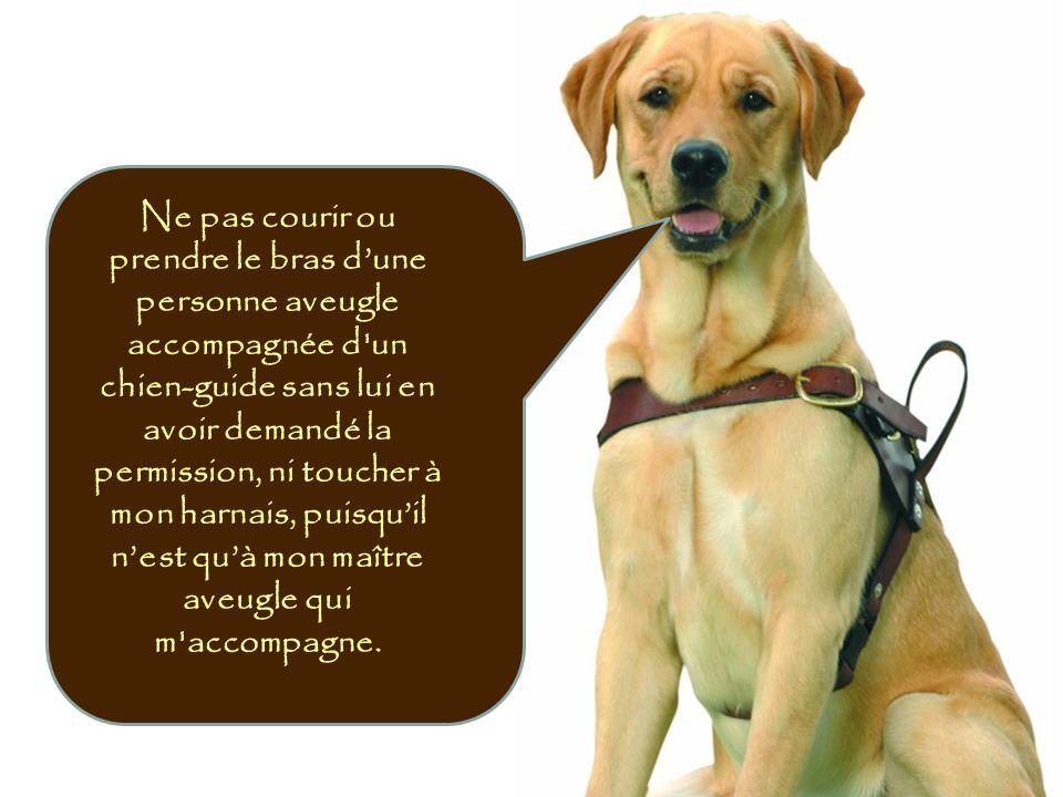 Ne pas courir ou prendre le bras d'une personne aveugle accompagnée d un chien-guide sans lui en avoir demandé la permission, ni toucher à mon harnais, puisqu'il n'est qu'à mon maître aveugle qui m accompagne.