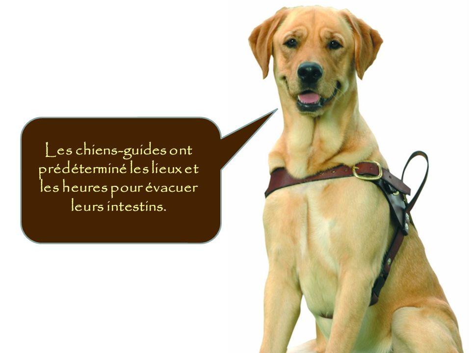 Les chiens-guides ont prédéterminé les lieux et les heures pour évacuer leurs intestins.