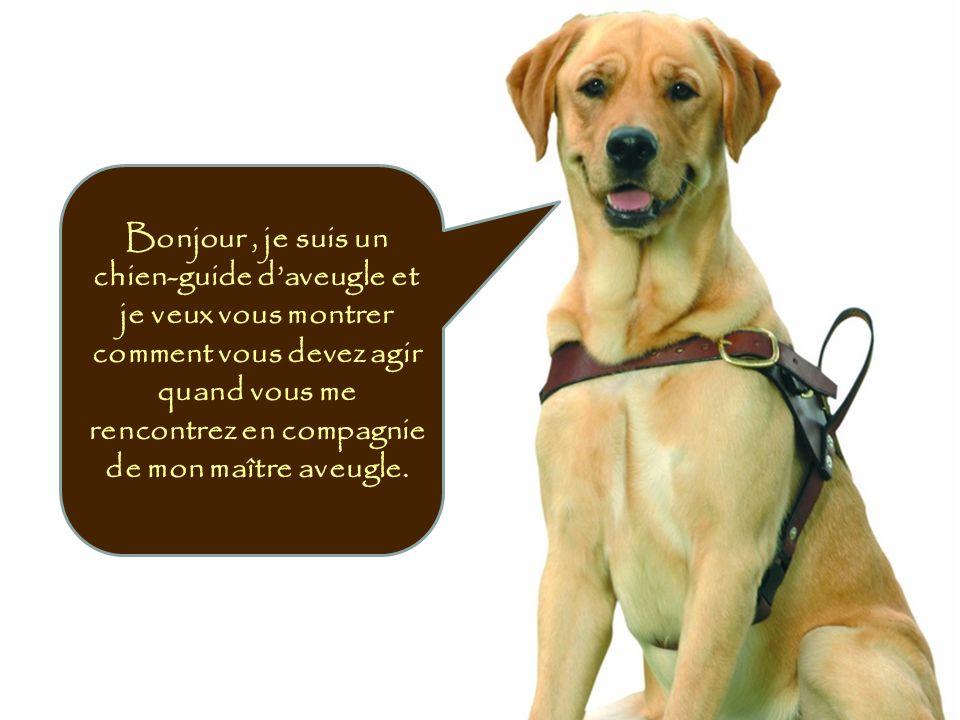 Bonjour , je suis un chien-guide d'aveugle et je veux vous montrer comment vous devez agir quand vous me rencontrez en compagnie de mon maître aveugle.
