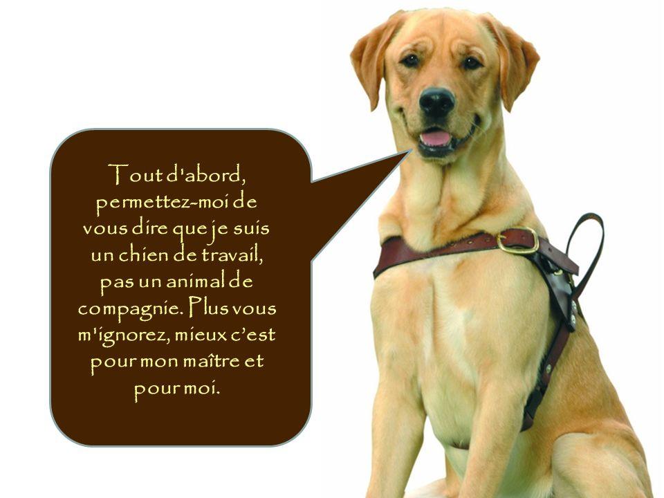 Tout d abord, permettez-moi de vous dire que je suis un chien de travail, pas un animal de compagnie.