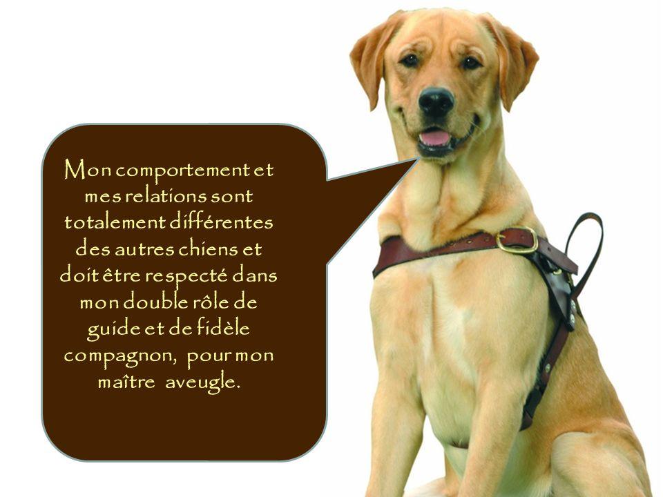 Mon comportement et mes relations sont totalement différentes des autres chiens et doit être respecté dans mon double rôle de guide et de fidèle compagnon, pour mon maître aveugle.