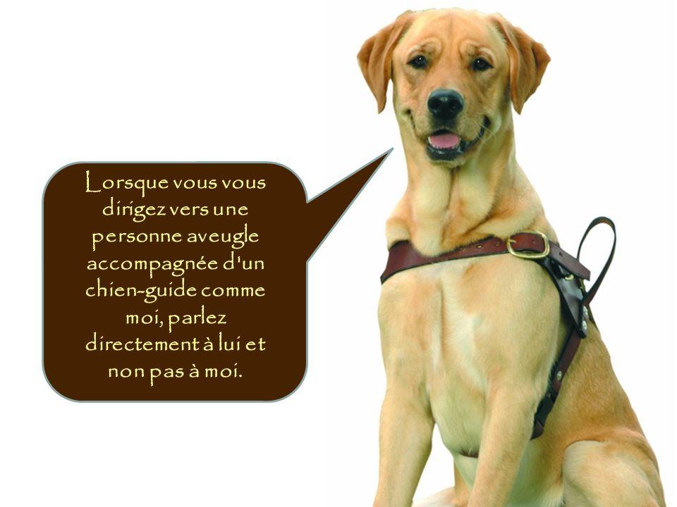 Lorsque vous vous dirigez vers une personne aveugle accompagnée d un chien-guide comme moi, parlez directement à lui et non pas à moi.