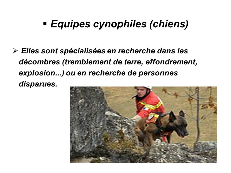 Equipes cynophiles (chiens)