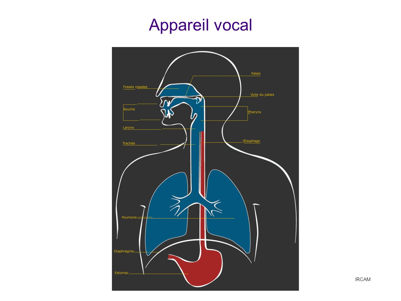 Anatomie générale, voir IRCAM