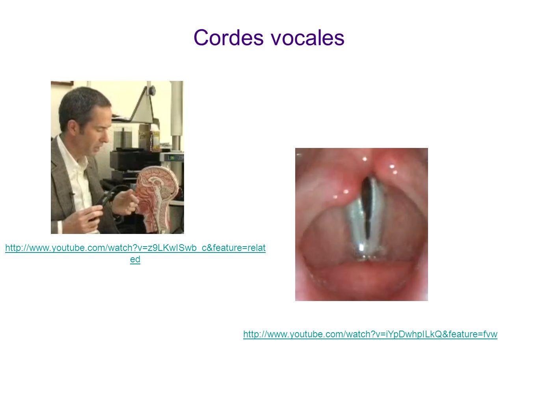 Cordes vocales Voir animations sur youtube ! La première montre comment et où est enfilé l'endoscope.