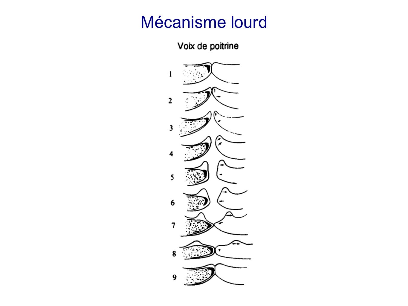 Mécanisme lourd Source: Thomas D. Rossing, The science of sound, Addison-Wesley 1990. Montre comment les cordes vibrent. Vue en coupe.