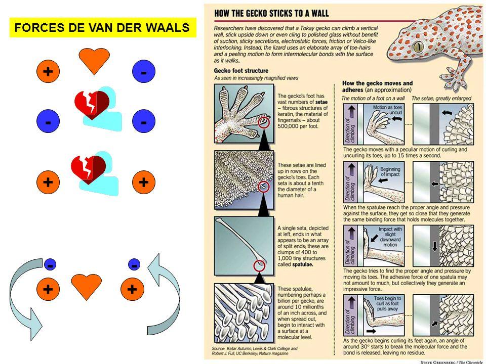 FORCES DE VAN DER WAALS + - - - + + - - + +