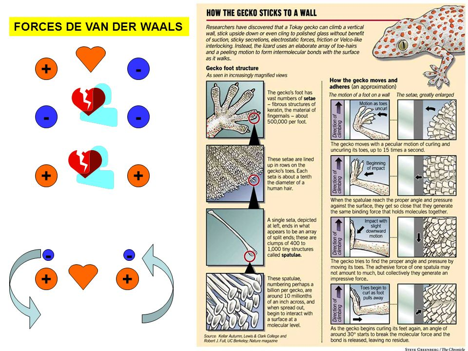 FORCES DE VAN DER WAALS
