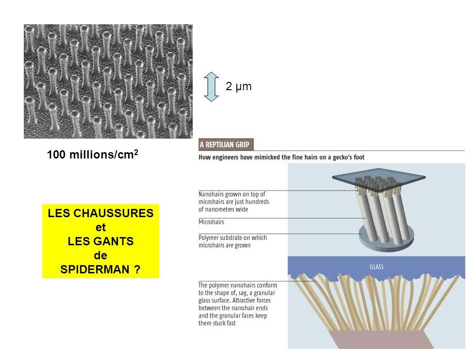 2 µm 100 millions/cm2 LES CHAUSSURES et LES GANTS de SPIDERMAN