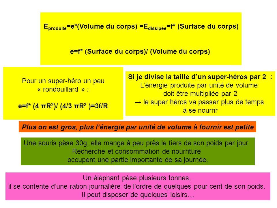 Eproduite=e*(Volume du corps) =Edissipée=f* (Surface du corps)