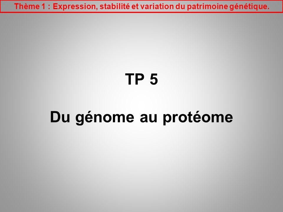 TP 5 Du génome au protéome