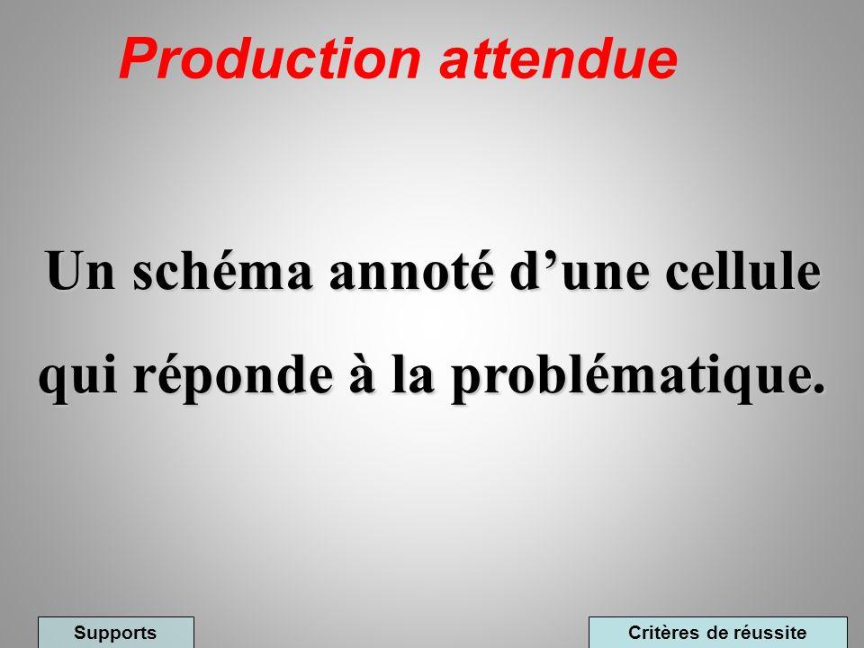 Un schéma annoté d'une cellule qui réponde à la problématique.