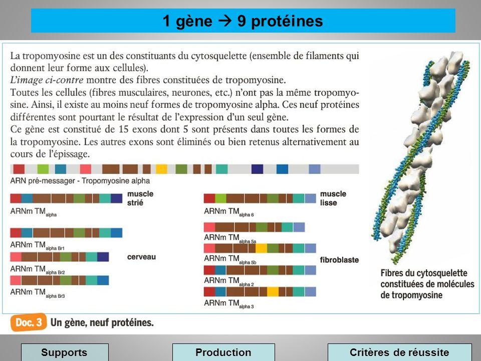 1 gène  9 protéines Supports Production Critères de réussite