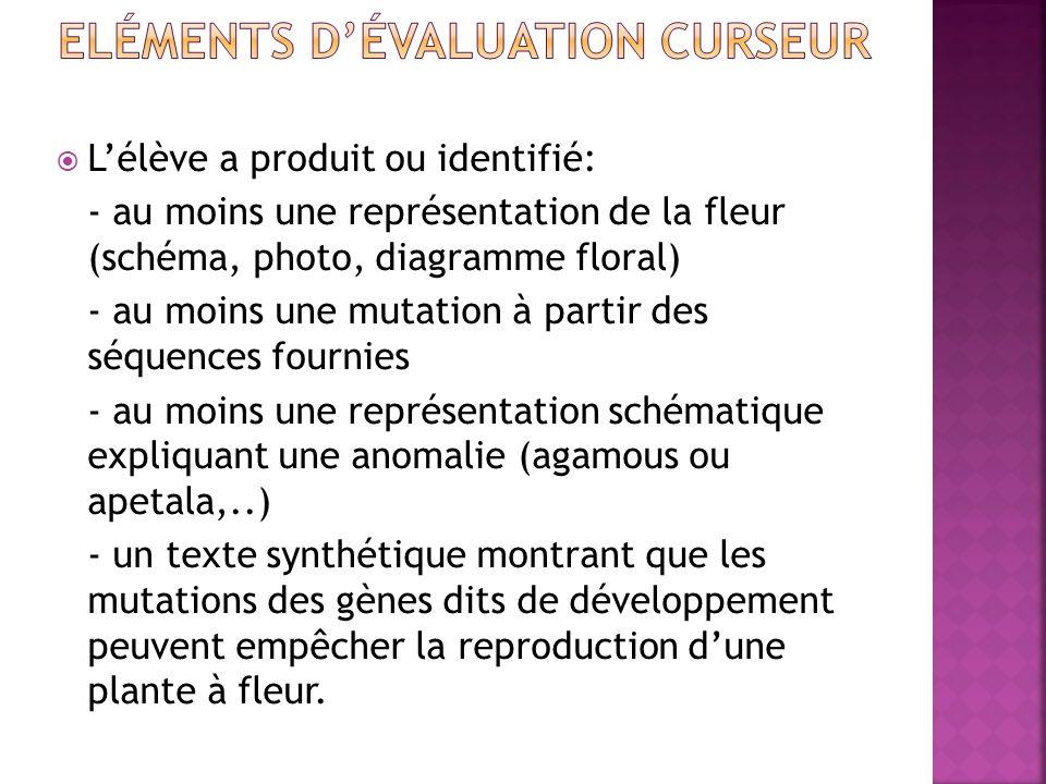 Eléments d'évaluation curseur