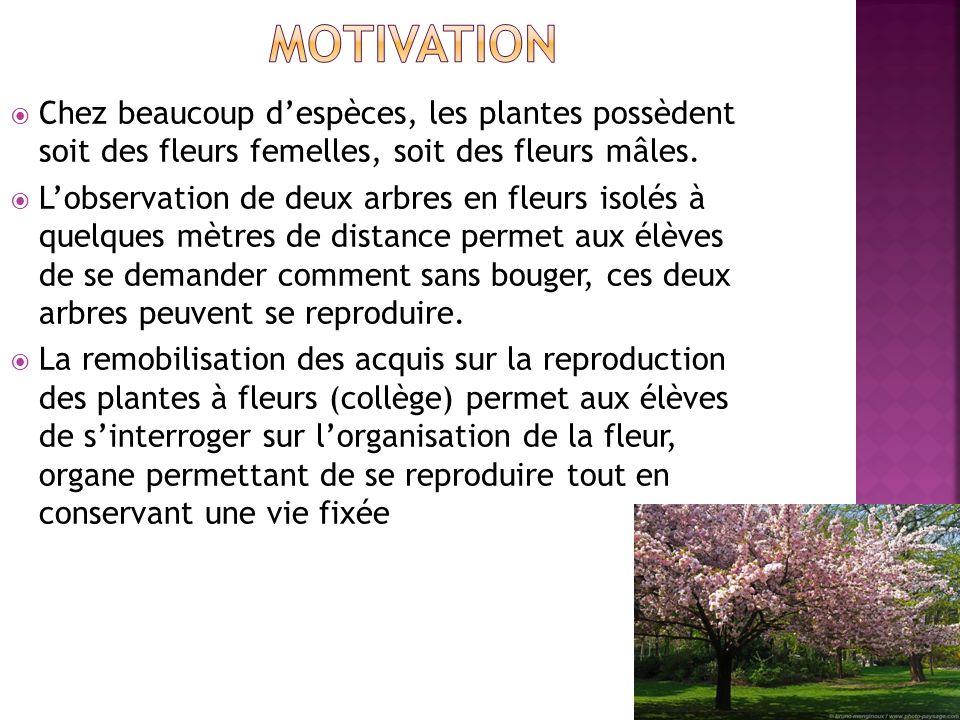 Motivation Chez beaucoup d'espèces, les plantes possèdent soit des fleurs femelles, soit des fleurs mâles.