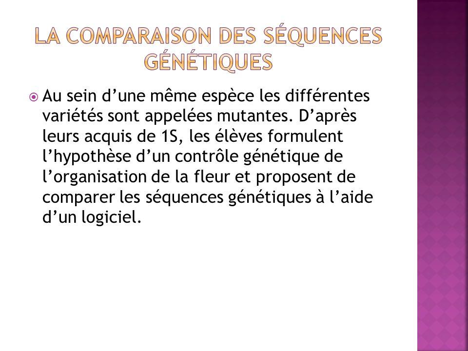 La comparaison des séquences génétiques