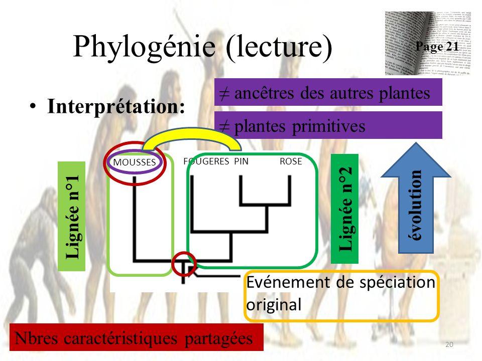 Phylogénie (lecture) Interprétation: ≠ ancêtres des autres plantes