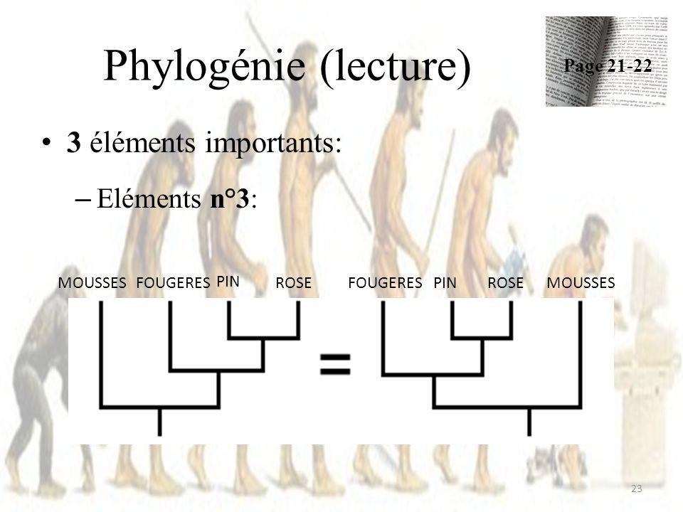 Phylogénie (lecture) 3 éléments importants: Eléments n°3: Page 21-22