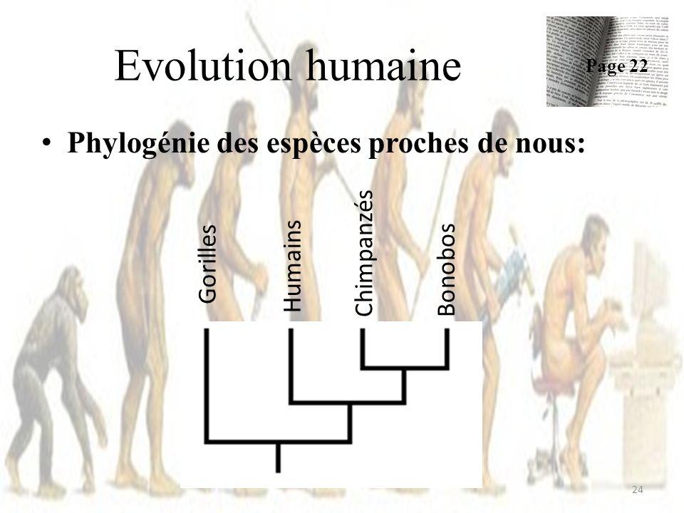 Evolution humaine Phylogénie des espèces proches de nous: Gorilles