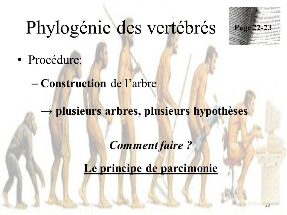 Phylogénie des vertébrés