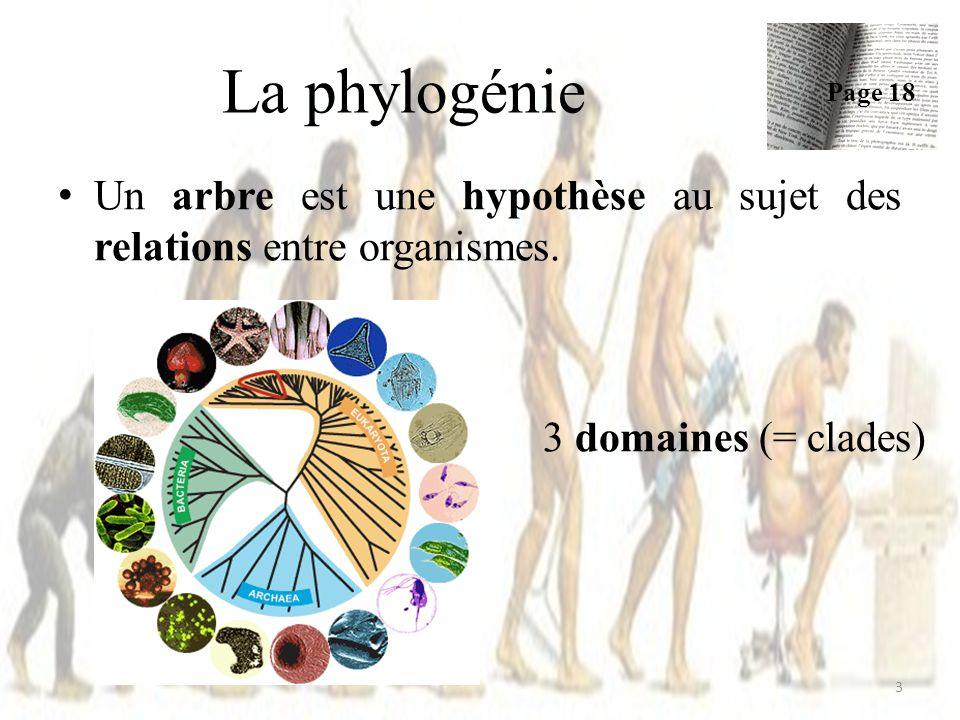 La phylogénie Page 18. Un arbre est une hypothèse au sujet des relations entre organismes.