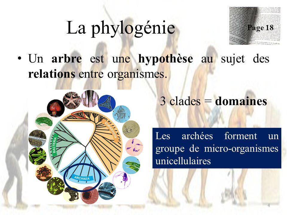 La phylogénie Page 18. Un arbre est une hypothèse au sujet des relations entre organismes. 3 clades = domaines.