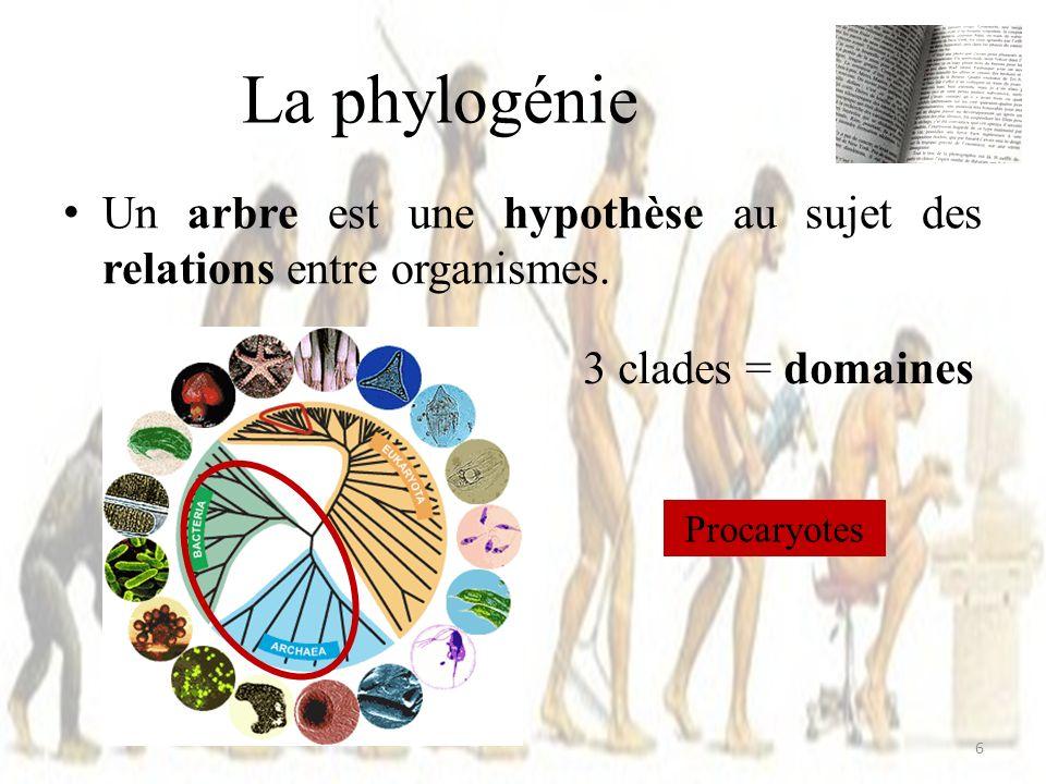 La phylogénie Un arbre est une hypothèse au sujet des relations entre organismes. 3 clades = domaines.