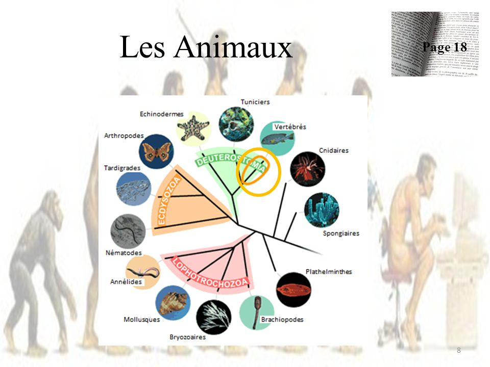 Les Animaux Page 18