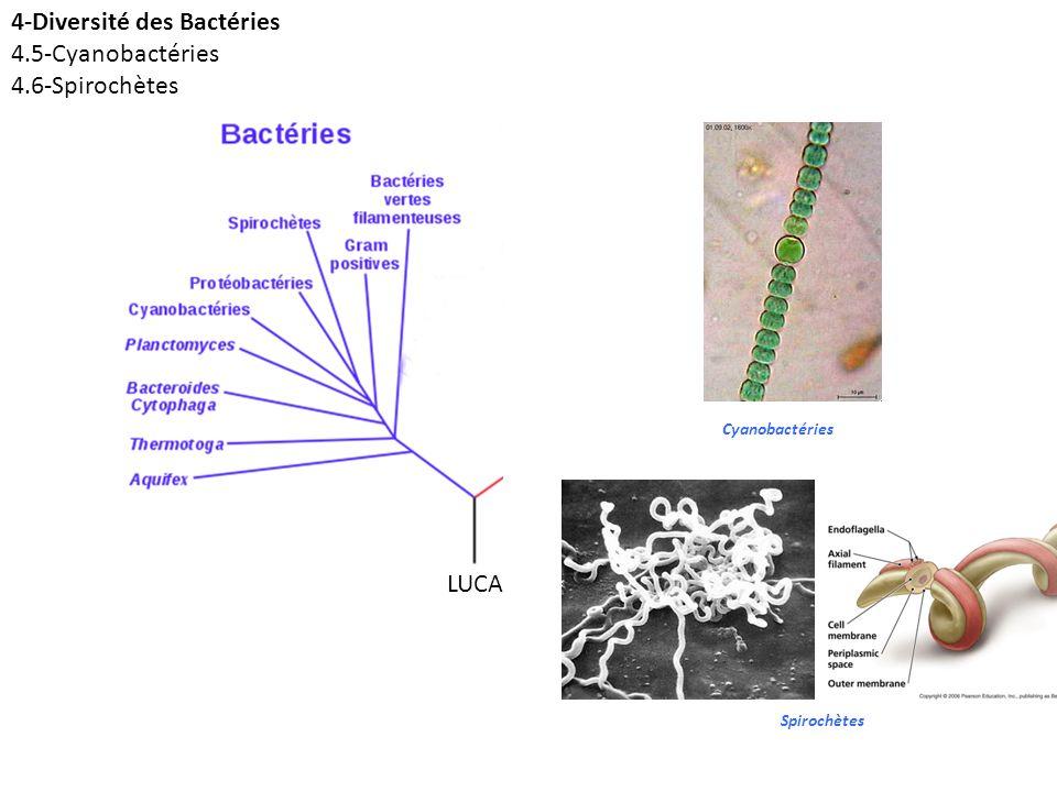 4-Diversité des Bactéries 4.5-Cyanobactéries 4.6-Spirochètes