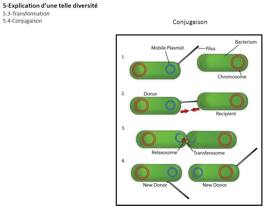 5-Explication d'une telle diversité