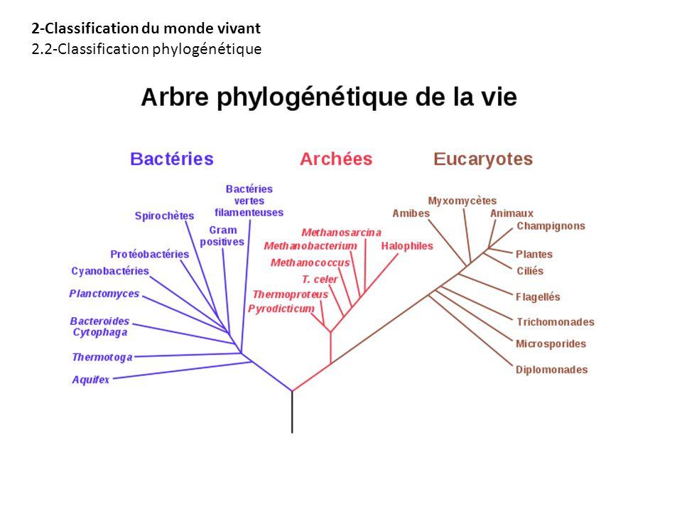 2-Classification du monde vivant 2.2-Classification phylogénétique