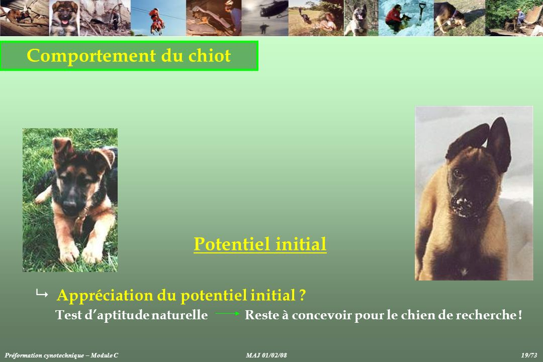 Comportement du chiot Potentiel initial