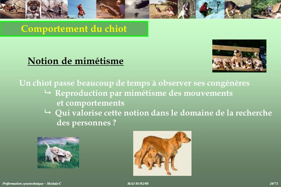 Comportement du chiot Notion de mimétisme