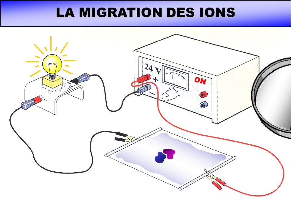 LA MIGRATION DES IONS ON