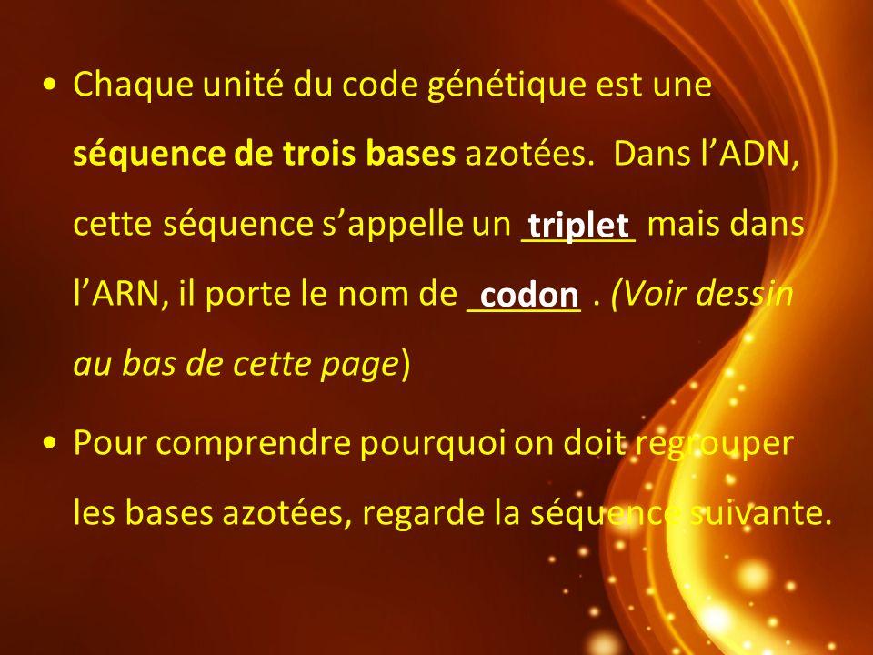Chaque unité du code génétique est une séquence de trois bases azotées