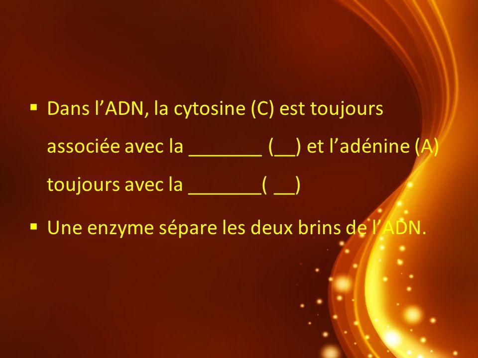 Dans l'ADN, la cytosine (C) est toujours associée avec la _______ (__) et l'adénine (A) toujours avec la _______( __)
